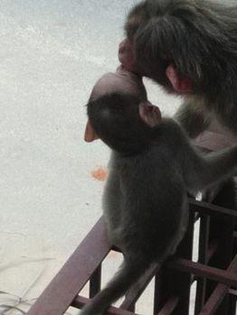 Infant Love.jpg