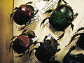 Insect Safari - beetle 37A.jpg