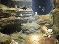 Istanbul Aquarium 33.jpg