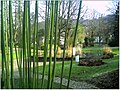 January Frost Botanic Garden Freiburg Iron Bamboo Curtain - Master Botany Photography 2014 - series Germany Saphir pictures - panoramio.jpg