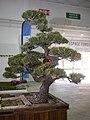 Japan Expo Sud - Ambiances - 2012-03-04- Jardin Japonais - P1350612.jpg