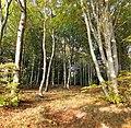 JasmundForest01.jpg