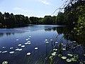 Jezioro Kluka koło wsi Dorotowo - panoramio.jpg