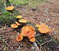 Jyväskylä - mushrooms 3.jpg