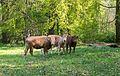 Kalletal - 2016-05-05 - NSG Rotenberg, Bärenkopf, Habichtsberg und Wihupsberg (093).jpg