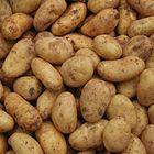 Kartoffeln Markt