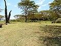 Kenya 2013. Lake Naivasha. - panoramio (9).jpg