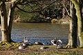 Kiltonga nature reserve, Newtownards (2) - geograph.org.uk - 358041.jpg
