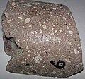Kimberlite (Pionerskaya Pipe, Late Devonian; Arkhangelsk Region, Russia) 5.jpg