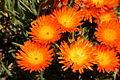 Kirstenbosch National Botanical Garden 7 (2933144617).jpg