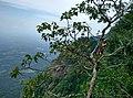 Kollengode South, Kerala, India - panoramio (41).jpg