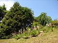 Kostelecký zámecký park (3).JPG