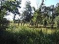 Kozara vadkörtefái.jpg