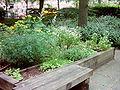 Kräutergarten Hammer Park 016.jpg