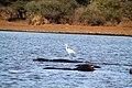 Kruger National Park, South Africa (14791297460).jpg