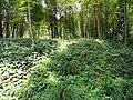 Kunming Botanical Garden - DSC02985.JPG