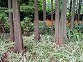 Kunming Botanical Garden - DSC03077.JPG