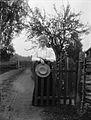 Kvinna med hatt i handen på bygata med gärdsgårdsstaket - Nordiska Museet - NMA.0041299.jpg