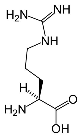 Skeletal structure of L -arginine