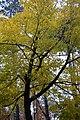 LSG Sudmerberg - Bäume (10).jpg