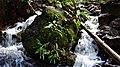 La belleza de los ríos en la selva cruceña.jpg