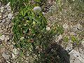 Lago-di-Endine-flora-spontanea-02.jpg