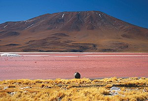 Geology of Bolivia - Laguna Colorada in the southern Altiplano lies just east of Cordillera Occidental's volcanoes (background mountain).