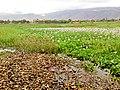 Laguna de Coña coña - panoramio.jpg