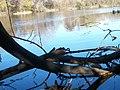 Lambert Lake - panoramio (10).jpg