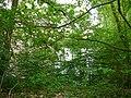 Langenfeld Haus Graven 0008.jpg