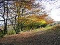 Last leaves of autumn - geograph.org.uk - 1041739.jpg