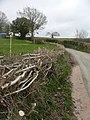 Layered hedge - geograph.org.uk - 748282.jpg