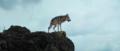 Le dernier loup - Les coulisses - l'entraînement des loups 4.png