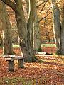 Leafy avenue (7104090455).jpg