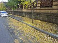 Leaves in street.jpg