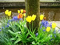 Leiden - Colours (3435310724).jpg