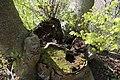 Leitenwälder der Isar 0585.jpg