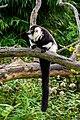 Lemur (24676976218).jpg
