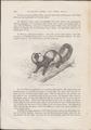 Lemur catta - 1700-1880 - Print - Iconographia Zoologica - Special Collections University of Amsterdam - UBA01 IZ19700174.tif