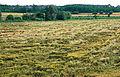 Les Plantes Cultivades. Cereals. Imatge 158.jpg