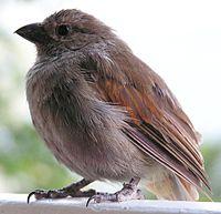 Lesser antillean bird5