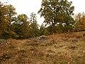 Libbhult höstbild - panoramio.jpg
