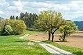 Liebenfels Rosenbichl Landschaft mit Bäumen und Feldern 27042020 7458.jpg