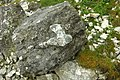 Limestone block with flint - geograph.org.uk - 1461780.jpg