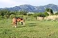 Livestock38.tif (27098022839).jpg