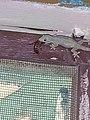 Lizard feed.jpg