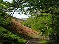 Llwybyr Dyffryn Gwy - Wye Valley Way - geograph.org.uk - 1298764.jpg