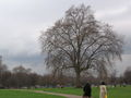 London Hyde park 20006-04-09.jpg