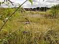 Long eaton invaders site today.jpg