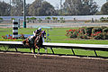 Los Alamitos Sept 2014 IMG 6801 (15317488892).jpg